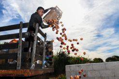 200415-food-distribution-101-shipping-logistics-supply-chain-food-supply-coronavirus-covid-19-pandemic-2-composting-usda-700x467